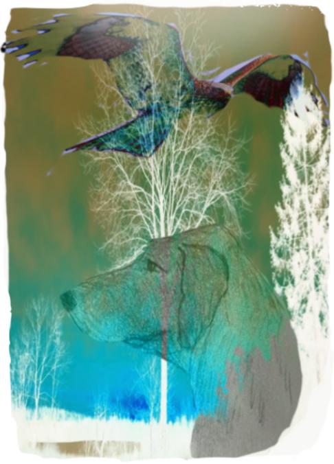 Annette Hoff-Jessen, digital-art, digitalprint, Atelier-Kaiserborgen